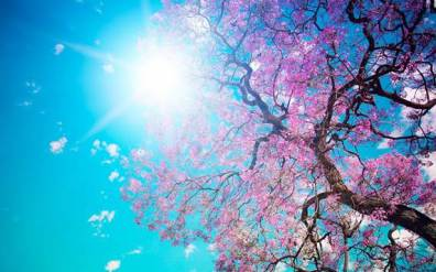 LMM_Spring
