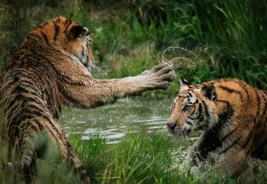 Fight by-frida-bredesen-317281